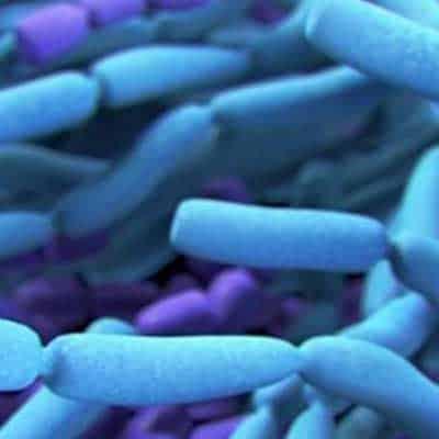 La prevenzione del pericolo alimentare del bacillus cereus negli alimenti