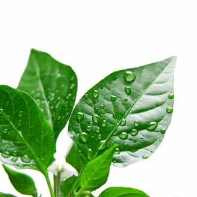 Certificazione Brc Plant Based