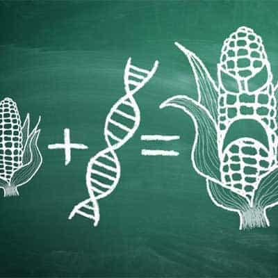 organismi Geneticamente Modificati OGM