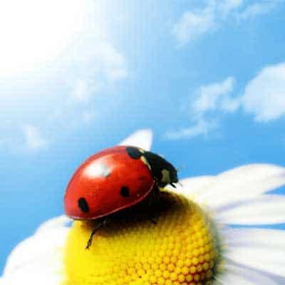 Utilizzo di pesticidi impatto sulla salute umana e sull'ambiente